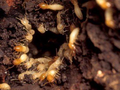 Pest Control Perth Hills